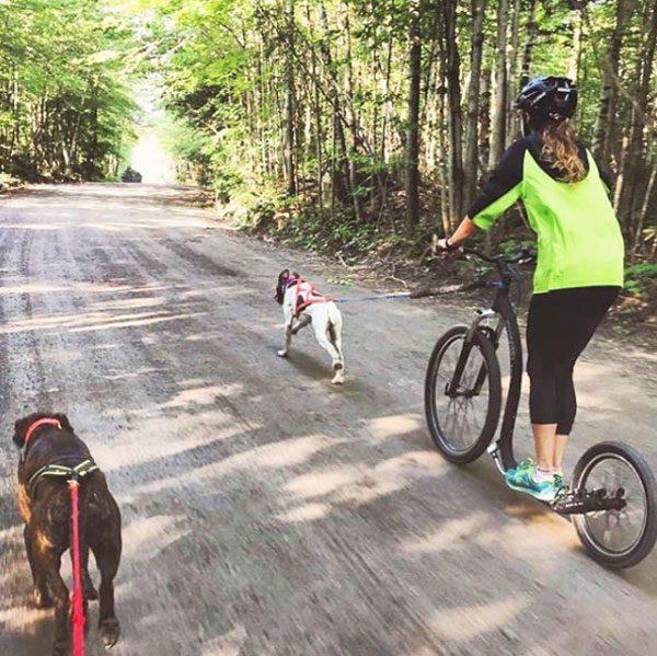 Kickbike dog scooter